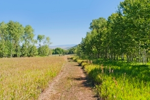 A tranquil  green country scene with a path leading througの写真素材 [FYI03638064]