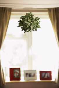 House plant hanging from ceilingの写真素材 [FYI03638428]