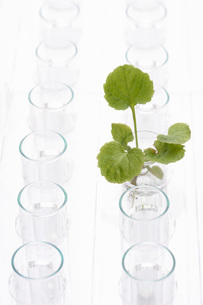 Plant in glass surrounded by empty glassesの写真素材 [FYI03638455]