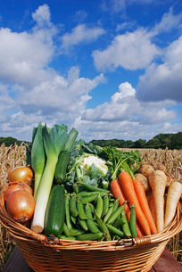 Basket of vegetables outdoorsの写真素材 [FYI03638923]