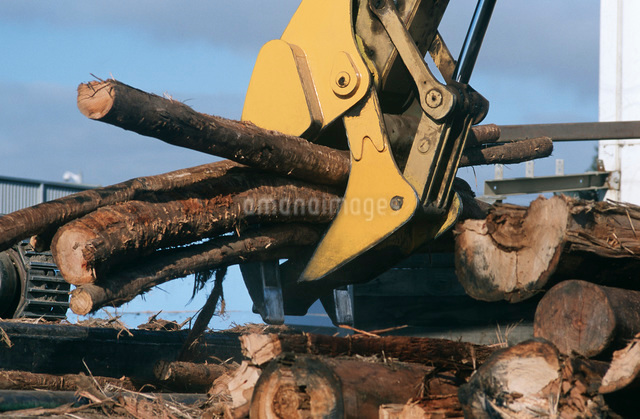 Plantation Eucalyptus (Bluegum) trees being prepared for wooの写真素材 [FYI03638991]