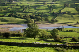 Fields in Yorkshire Dales Yorkshire Englandの写真素材 [FYI03640595]