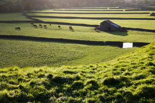 Pasture in Yorkshire Dales Yorkshire Englandの写真素材 [FYI03640596]