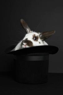 Rabbit in top hat studio shotの写真素材 [FYI03641503]