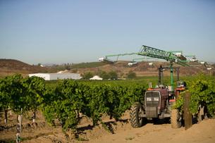 Agricultural sprinkler in vineyardの写真素材 [FYI03641572]