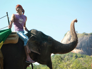 Young man riding elephant side view looking over shoulder moの写真素材 [FYI03642321]