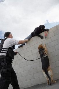 Security guard with dog catching thiefの写真素材 [FYI03642630]