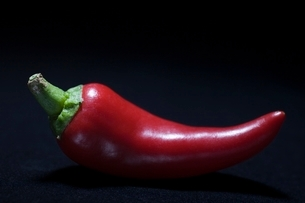 Red chilli pepperの写真素材 [FYI03643335]