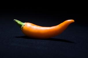 Orange chilli pepperの写真素材 [FYI03643337]