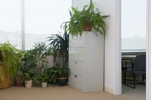 Potted plants by office windowの写真素材 [FYI03644163]