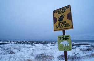 Canada Beach of Churchill Polar Bear information signの写真素材 [FYI03644447]