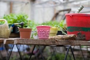 Gardening equipment in greenhouseの写真素材 [FYI03645244]