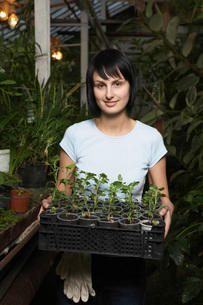 Greenhouse Worker with Tray of Potted Plantsの写真素材 [FYI03645624]