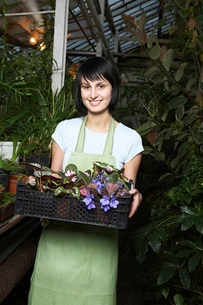Greenhouse Worker with Tray of Potted Plantsの写真素材 [FYI03645625]