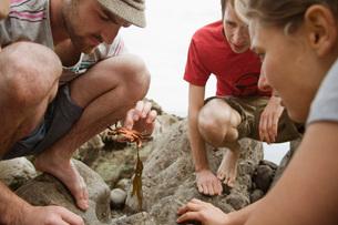 Young travelers looking at sea animal threw at a seashoreの写真素材 [FYI03645882]