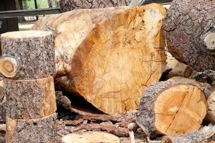 Chopped wooden logsの写真素材 [FYI03646138]