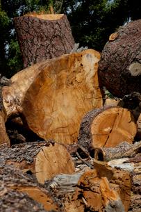 Chopped wood logsの写真素材 [FYI03646139]