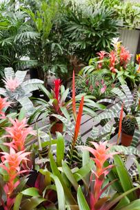 Plants in botanical gardenの写真素材 [FYI03646230]