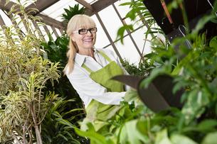 Portrait of a happy senior gardener cultivating plants in grの写真素材 [FYI03646233]