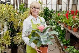 Portrait of a senior gardener holding pot plant in garden ceの写真素材 [FYI03646236]