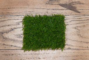 Artificial grass close upの写真素材 [FYI03646750]