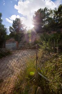 Rural road in Valenciaの写真素材 [FYI03646830]