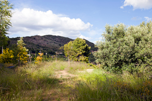 View of countryside and hills in Valenciaの写真素材 [FYI03646831]