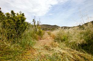 Path mown through long grass, Valencia region, Spainの写真素材 [FYI03646841]