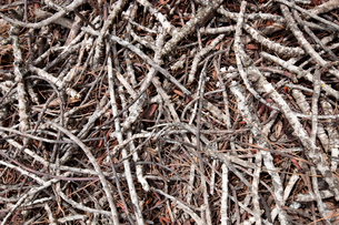 Close-up view of dead branches and sticksの写真素材 [FYI03646847]