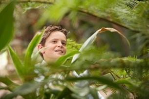 Boy Looking at Plantsの写真素材 [FYI03647786]
