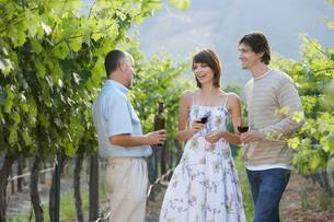 People drinking wine in vineyardの写真素材 [FYI03647932]
