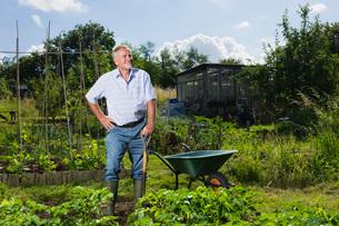 Senior man gardeningの写真素材 [FYI03648602]