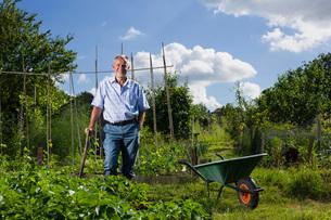 Senior man gardening portraitの写真素材 [FYI03648604]