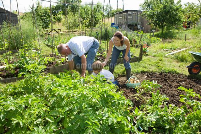 Family with boy gardeningの写真素材 [FYI03648614]