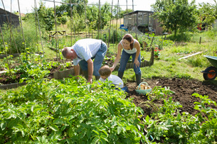 Family with boy gardeningの写真素材 [FYI03648614]