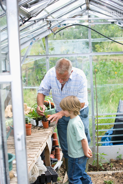 Boy planting flowers with grandfather in greenhouseの写真素材 [FYI03648616]
