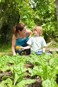 Boy gardening with motherの写真素材 [FYI03648622]