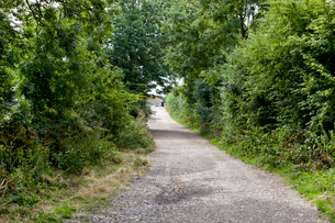 Country Lane in British Countrysideの写真素材 [FYI03649336]