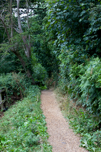 Country Lane in British Countrysideの写真素材 [FYI03649360]