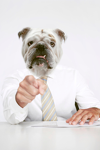 British Bulldog Businessman pointing at the cameraの写真素材 [FYI03649804]