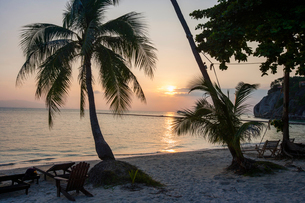 Palm trees and deck chairs on beach at sunset, Koh Pha Ngan, Thailandの写真素材 [FYI03649899]