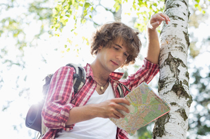 Male backpacker reading map while leaning on tree trunk in forestの写真素材 [FYI03651656]