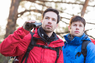 Male hikers with binoculars in forestの写真素材 [FYI03652010]