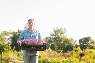 Portrait of gardener carrying crate with flower pots in gardenの写真素材 [FYI03653205]
