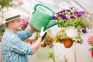 Side view of middle-aged man watering flower plants in greenhouseの写真素材 [FYI03653219]