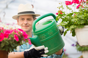 Middle-aged man watering flower plants in greenhouseの写真素材 [FYI03653220]