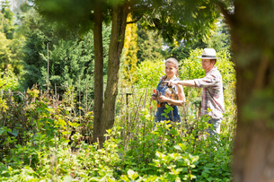Male and female gardeners discussing over plants at plant nurseryの写真素材 [FYI03653231]