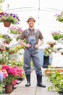 Full-length portrait of happy gardener standing at greenhouseの写真素材 [FYI03653232]