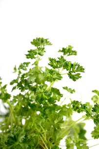 Close up of parsley on white backgroundの写真素材 [FYI03653832]