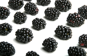 Studio shot of blackberries on white backgroundの写真素材 [FYI03653840]